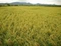 中草药碳氢秸秆有机肥 (1)